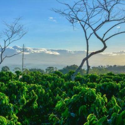 FAO công bố Báo cáo Triển vọng ngành nông nghiệp thế giới đến năm 2030
